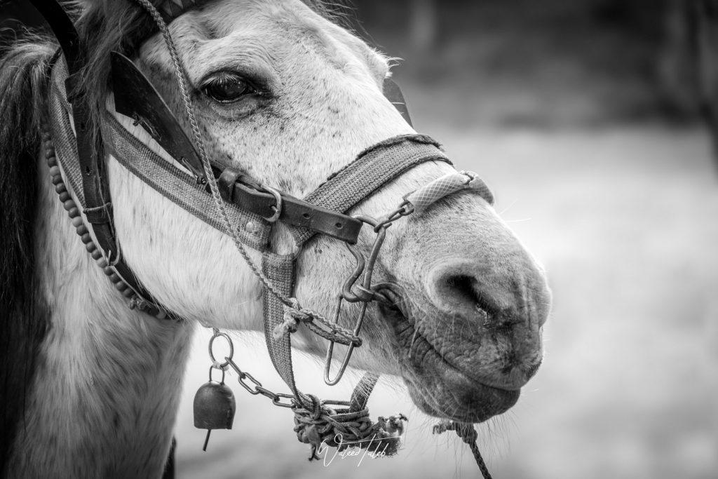 Smiley Horse Face